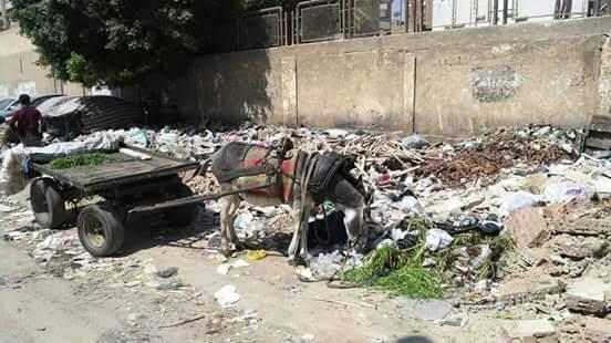 صور.. تجمعات للقمامة على سور مدرسة «أحمد زويل» بدار السلام