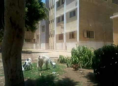 الإهمال يحاصر مستشفى «الشورانية» وسط غضب من الأهالي (صور)
