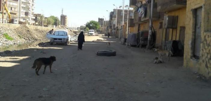صور.. ظاهرة الكلاب الضالةفي شوارع «أسوان» يهدد الأهالي