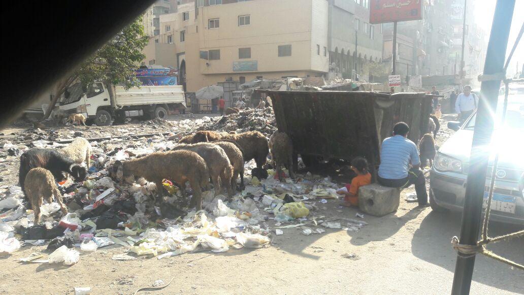 تجمعات للقمامة أمام مدرسة 23 يوليو بمنشية السد العالي (صور)