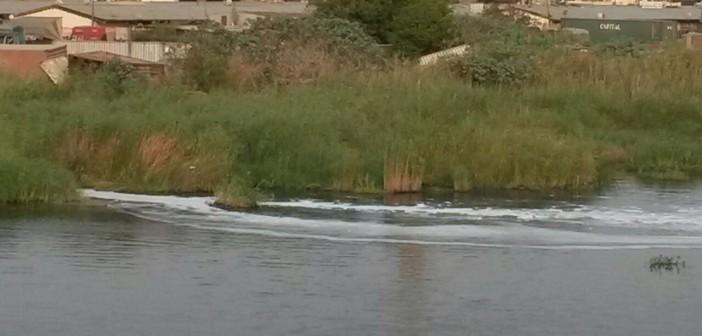صرف صحي على ضفاف بحيرة المنزلة ببورسعيد (صورة)