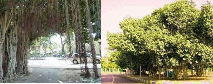 عمرها تجاوز الـ200 عام.. قطع أشجار في شارع محمد علي بالإسماعيلية (صور)