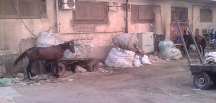 «عزبة الورد» تعاني من القمامة والأهالي: اشتكينا كتير..(صور)