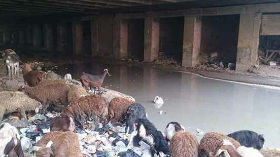 مواطن يطالب بإزالة القمامة وسحب الصرف من أسفل دائري الوراق