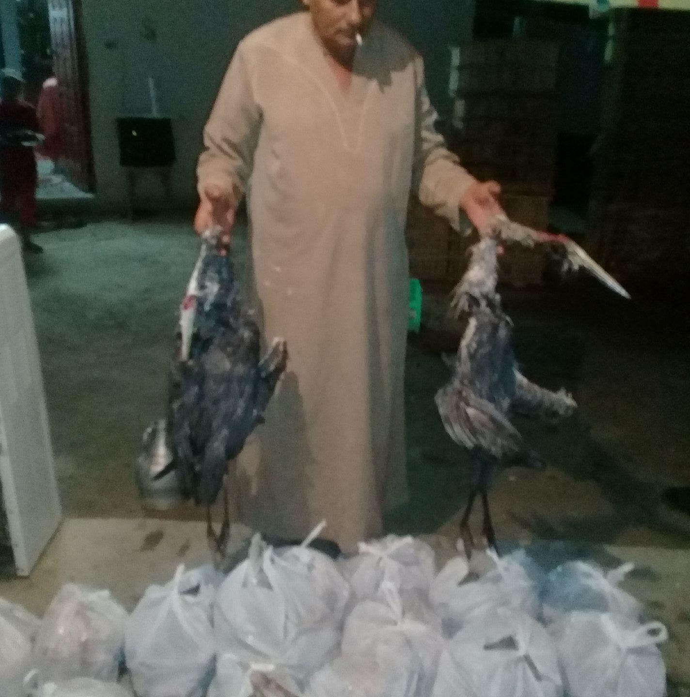 إلا كما طار «قُتل».. عمليات صيد جائر برعاية «برنس الطيور المهاجرة»