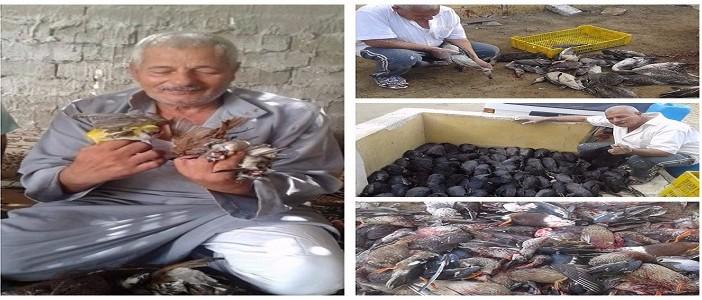 ▶️إلا كما طار «قُتل».. عمليات صيد جائر برعاية «برنس الطيور المهاجرة» (صور وفيديو)
