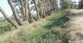 مطالب بتطهير قناة مائية وفروعها من المخلفات والحشائش في بني سويف