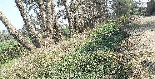 مطالب بتطهير ترعة حيوية وفروعها في بني سويف (صور)