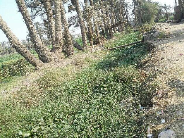 مطالب بتطهير قناة مائية وفروعها من المخلفات والحشائش في بني سويف (صور)