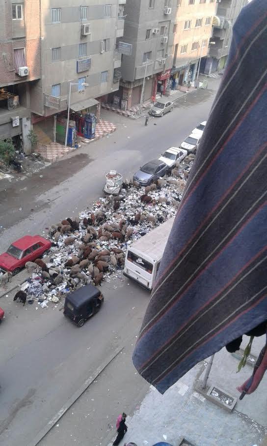 سكان «بشتيل» يشكون انتشار القمامة في الشوارع (صور)
