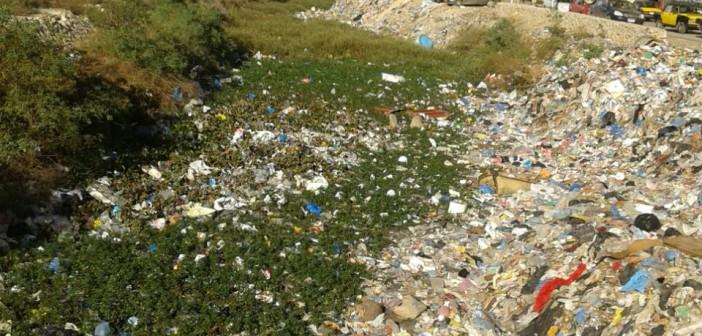بالصور.. مطالب بتطهير ترعة المحمودية من القمامة والحيوانات النافقة