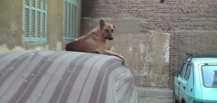 سكان في الأميرية يطالبون بمواجهة انتشار الكلاب الضالة (صور وفيديو)