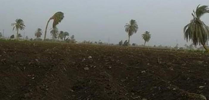 نقص مياه الري يهدد ألف فدان بالبوار في «أبو غالب» بالجيزة