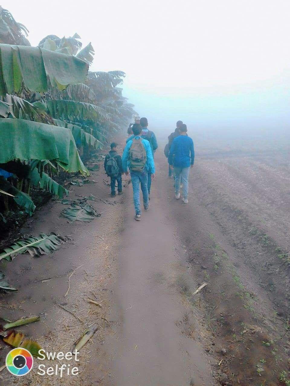 في الشبورة وبين مزارع الموز.. رحلة تلاميذ مدرسة في إحدى قرى كوم حمادة