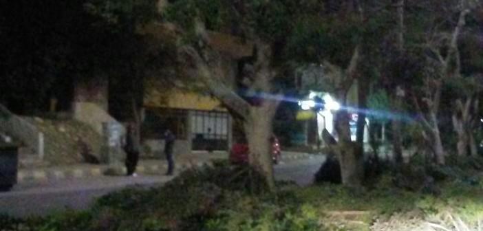 مجزرة أشجار في «العبور».. وانتقادات لإهمال الحي الأول (صور)