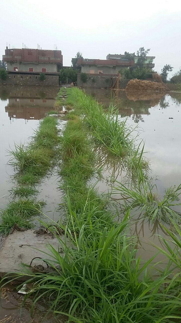أهالي 3 قرى بالبحيرة يطالبون بمد خدمات شبكة الصرف الصحي