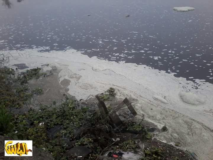 صور منسوبة.. بقع بيضاء في مياه نهر النيل بالمحمودية «تقتل السمك»