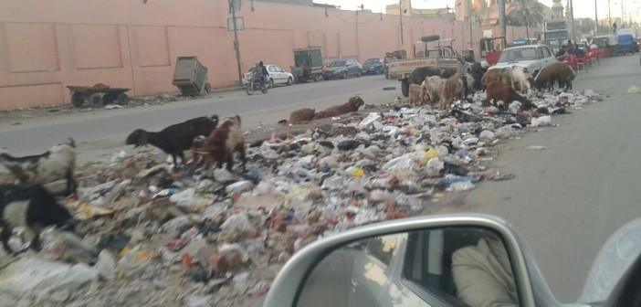 صور.. استياء بين أهالي «شرق شبرا» بسبب انتشار القمامة في الشوارع